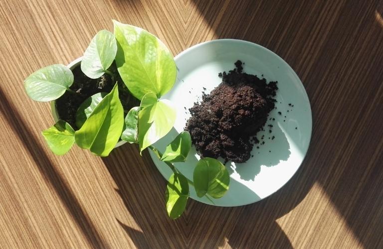 Kaffeesatz als Dünger: Natürliche Power für deine Pflanzen!