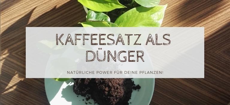 Kaffeesatz Als Dunger Naturliche Power Fur Deine Pflanzen