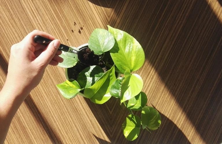 kaffeesatz als d nger nat rliche power f r deine pflanzen. Black Bedroom Furniture Sets. Home Design Ideas
