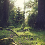 Der Wald: 7 Gründe, warum du öfters im Wald sein solltest