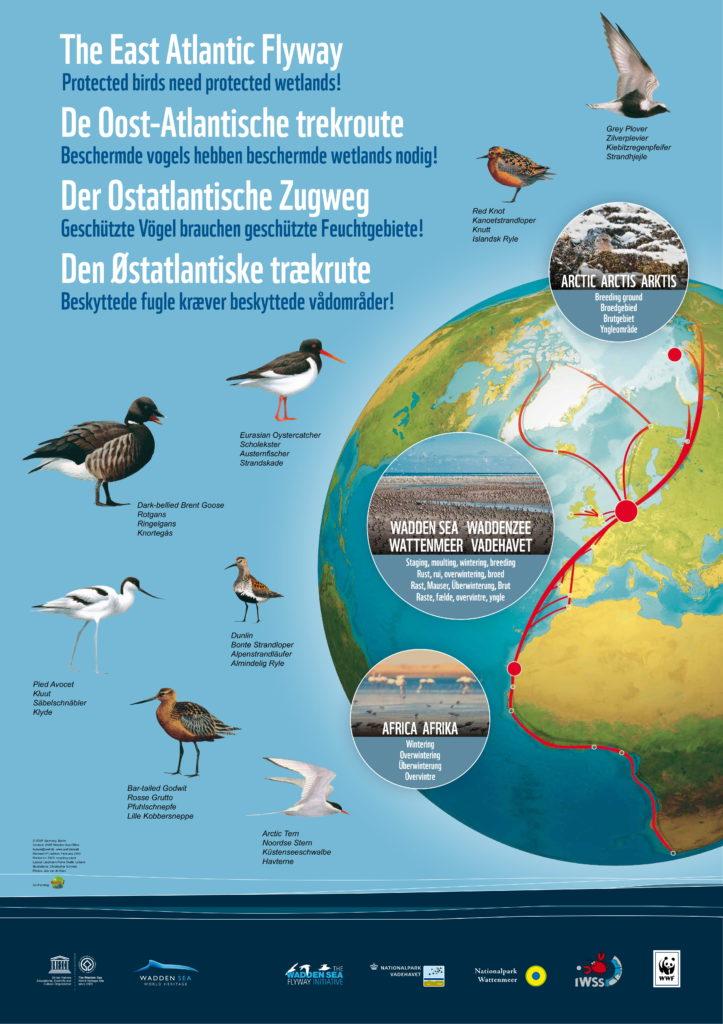 Unser Wattenmeer: Infos zur Entstehung, zum Ökosystem und zum Weltnaturerbe: Zugvögel: Der Ostatlantische Zugweg