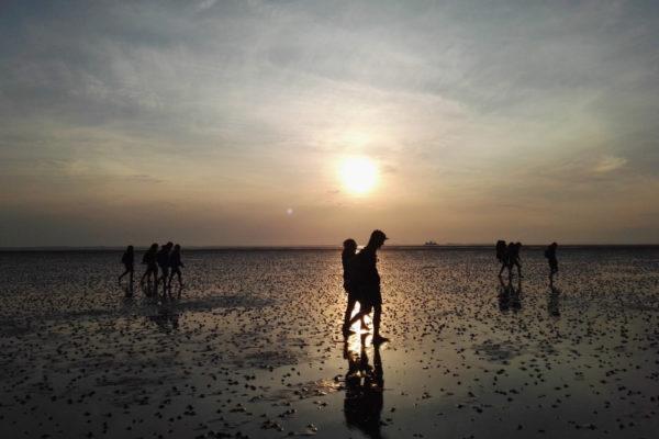 Unser Nationalpark Wattenmeer: Infos rund um das Weltnaturerbe