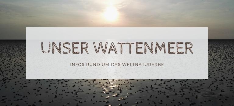Unser Wattenmeer: Infos zur Entstehung, zum Ökosystem und zum Weltnaturerbe