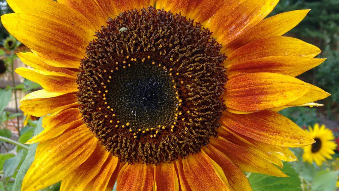 Hintergrundbilder Natur_Hintergrundbilder Sommer: Kostenloser Download!