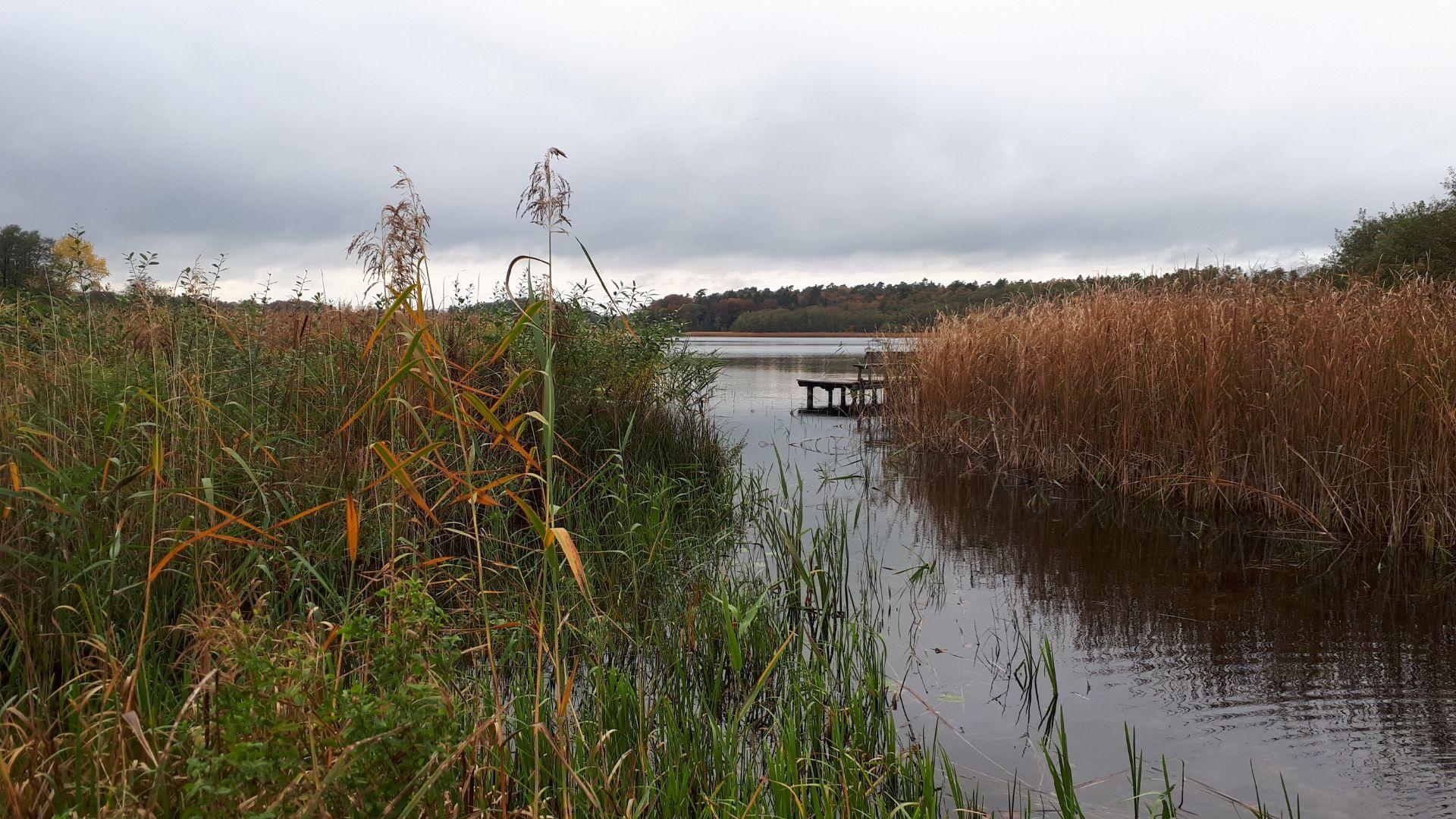 nordischgruen_kostenlose Hintergrundbilder Natur_Norddeutschland