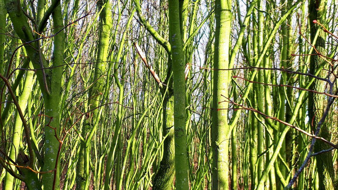 Hintergrundbilder Natur_Wald im Winter