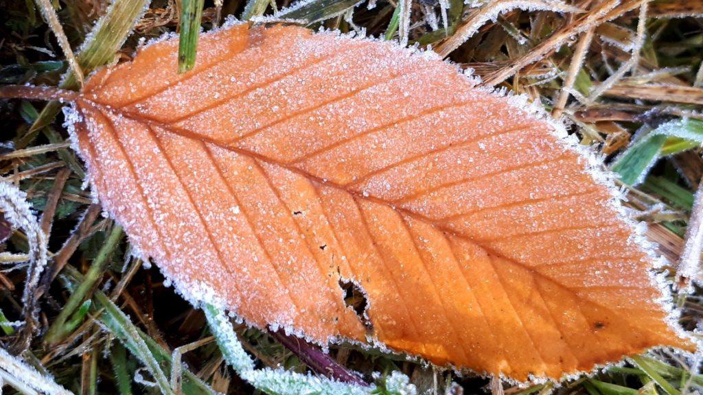nordischgruen_kostenlose Hintergrundbilder Natur_Herbstwald Laub