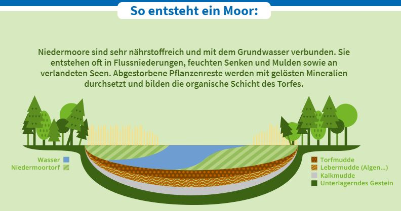Das Moor: Welche Bedeutung hat das Moor für unser Klima? Klimawandel & Klimaschutz: Moore in Schleswig-Holstein