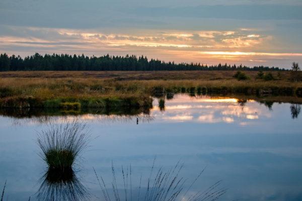 Das Moor und seine Bedeutung für den Klimawandel