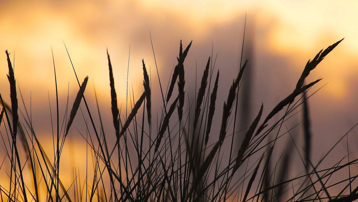 Hintergrundbilder Natur: Kostenlose Download!