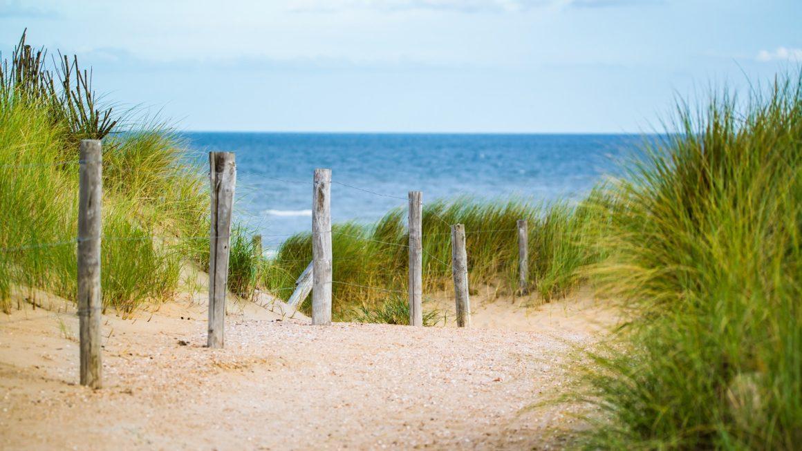 nordischgruen_kostenlose Hintergrundbilder Natur_Robbe