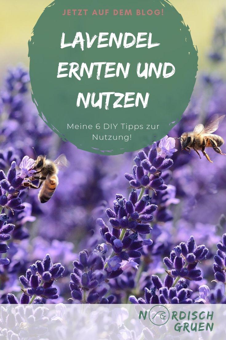 Lavendel richtig ernten und nutzen: Meine 6 DIY Tipps für getrocknete Lavendelblüten aus dem Garten oder vom Balkon.
