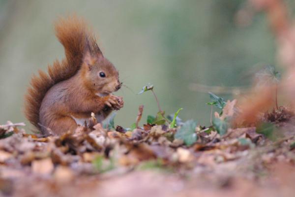 Eichhörnchen füttern: Wie Balkon und Garten zum Eichhörnchen-Paradies werden
