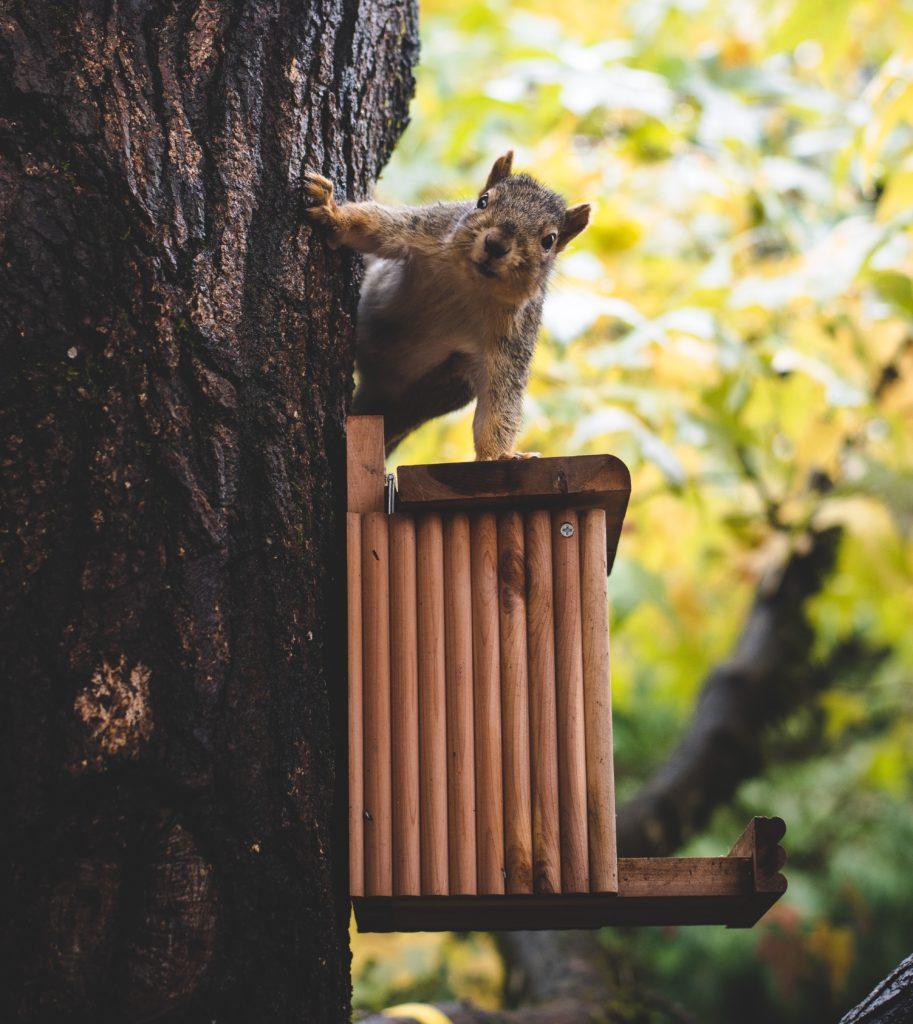 Eichhörnchen füttern in Balkon und Garten