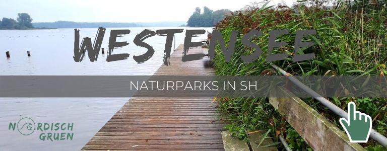 Unterwegs im Naturpark Westensee (2ter Stopp)