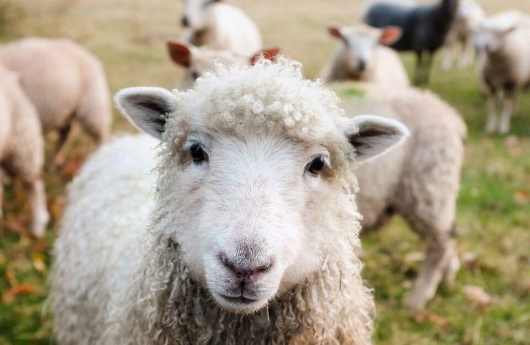 Frischer geht nicht! 18 Hofläden in Schleswig-Holstein