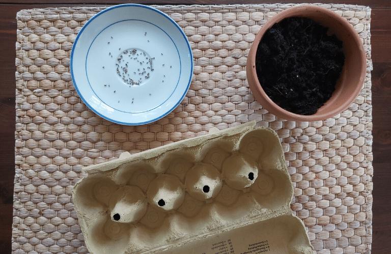 Anzuchtbehälter selber machen: So einfach verwandelst du dein Papiermüll in einen Anzuchtbehälter: Eierkarton