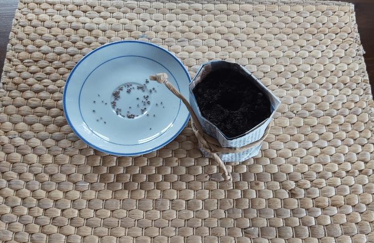Anzuchtbehälter selber machen: So einfach verwandelst du dein Papiermüll in einen Anzuchtbehälter: Zeitungspapier Samen