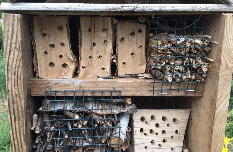 Insektenhotel selber bauen_ Anleitung für einfache Nisthilfen