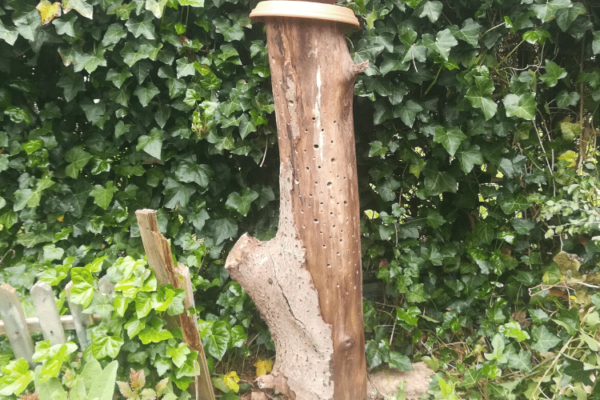 Insektenhotel selber bauen: Anleitung für einfache Nisthilfen