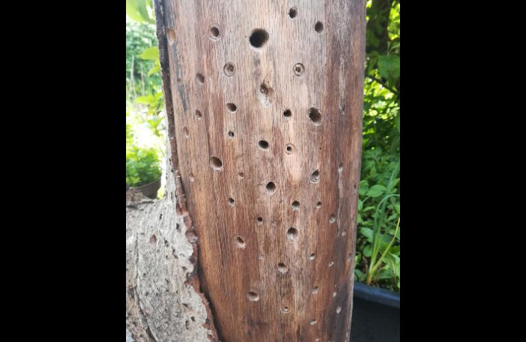 Insektenhotel selber machen: fertige Löcher
