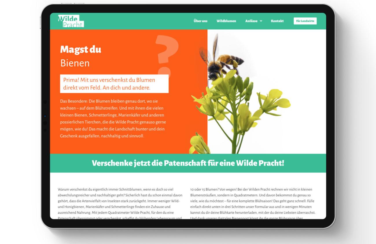 Wilde Pracht _ Webseite_nordischgruen_Blühwiese Schleswig-Holstein
